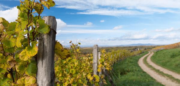 Escales Vers La Champagne | Petit train dans les vignobles de reims